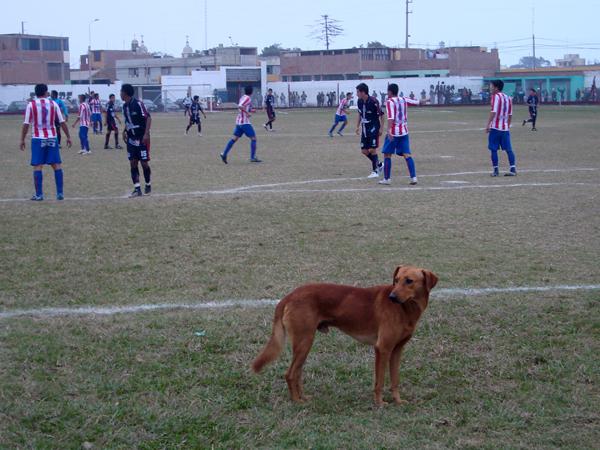 DE LUJO. Varios canes estuvieron invadiendo el estadio en pleno partido. Le presentamos a uno de ellos. (Foto: Paul Arrese / DeChalaca.com)