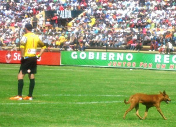 SE PASEAN. Hasta un can se podía pasear por el área de Alianza Lima, literalmente. (Foto: Jesús Suárez)