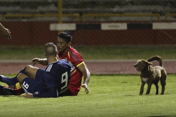 El perro se robó el espectáculo, pues apareció en un momento caliente del partido. (Foto: Pedro Monteverde / DeChalaca.com)